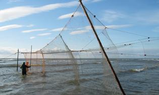 Mixed Stock Fisheries